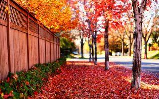 Бесплатные фото тротуар,дорога,асфальт,осень,красный,желтый,листья