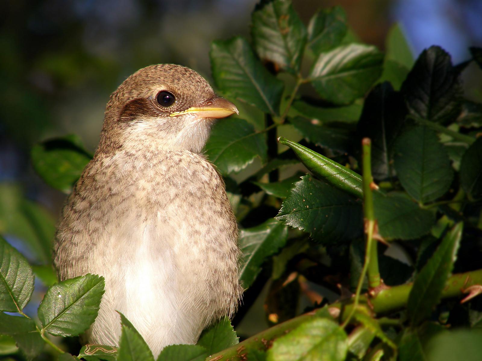 ветка, листья, птица