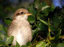 Бесплатные фото ветка,листья,птица,клюв,глаза,перья,птицы
