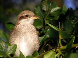 Заставки ветка, листья, птица