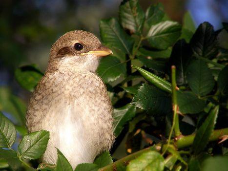 Фото бесплатно ветка, листья, птица