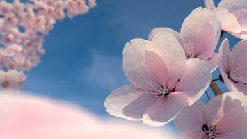 Бесплатные фото ветка,цветок,вишня,весна,соцветие,бутон,лепестки