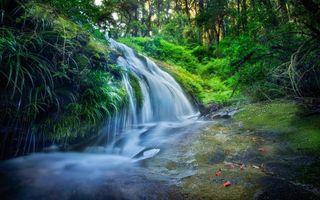 Фото бесплатно водопад, река, трава