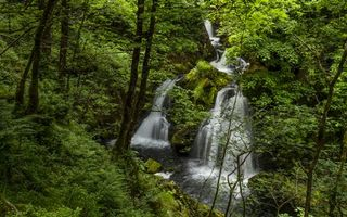 Заставки водопад,лето,лес,деревья,листья,природа