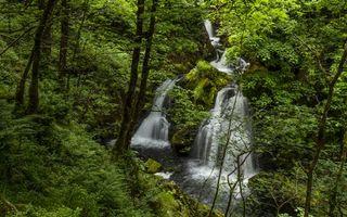 Фото бесплатно водопад, лето, лес