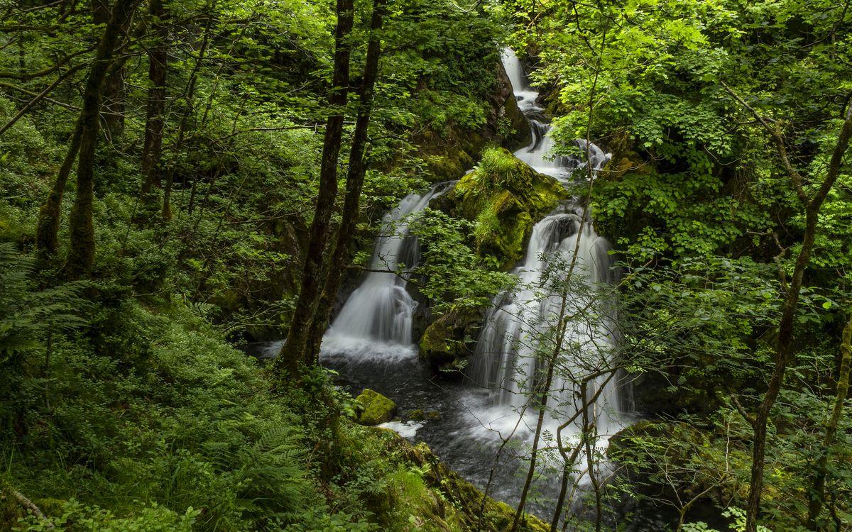 Фото бесплатно водопад, лето, лес, деревья, листья, природа, природа