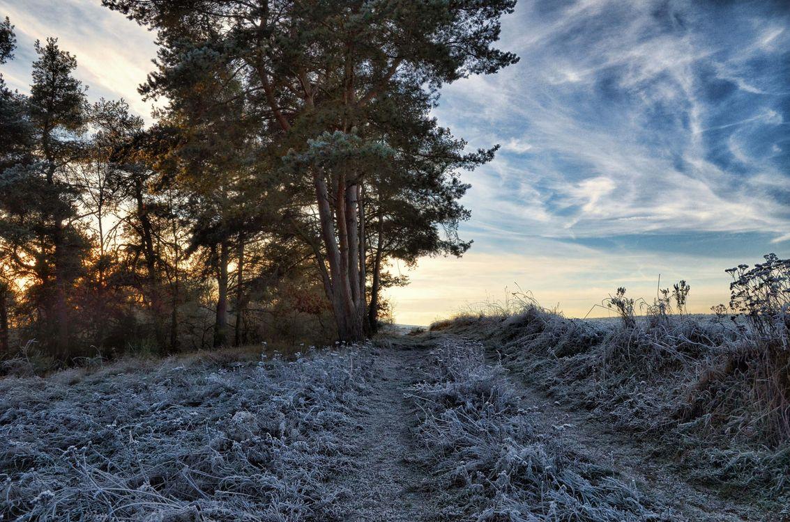 Фото бесплатно закат, поле, дорога, иней, деревья, пейзаж - на рабочий стол