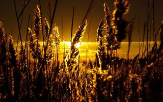Фото бесплатно закат, солнца, трава