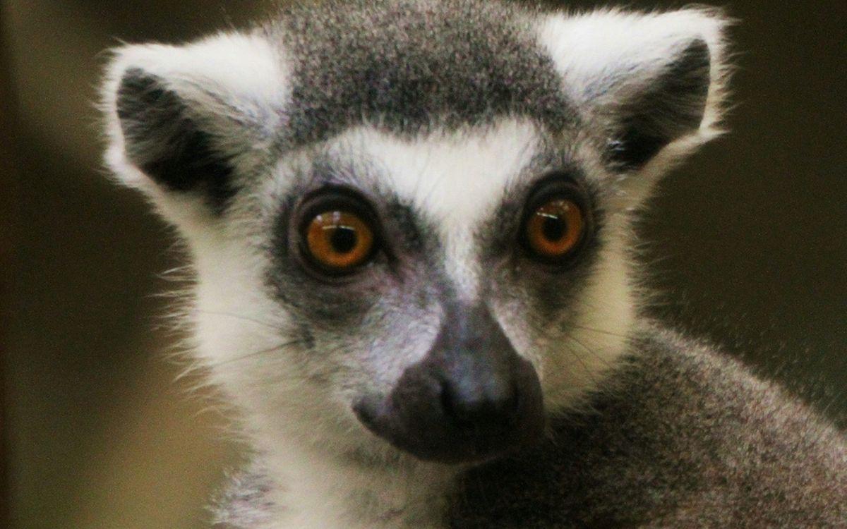 Free photo animal, eyes, ears - to desktop