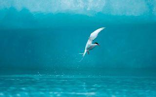 Бесплатные фото крячка,летить,море,вода,птицы