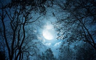 Бесплатные фото лунный свет,moon,clouds,trees,night,nature,landscape