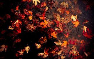 Фото бесплатно листья, лужи, вода