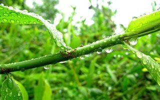 Фото бесплатно муравья, стебель, листья