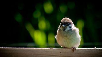 Фото бесплатно птица, птенец, ограда