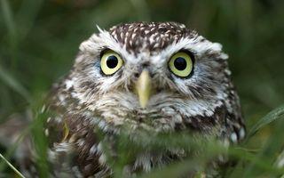 Photo free owl, eyes, feathers
