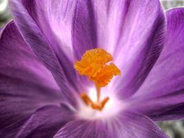 Фото бесплатно цветы, стебель, сердце