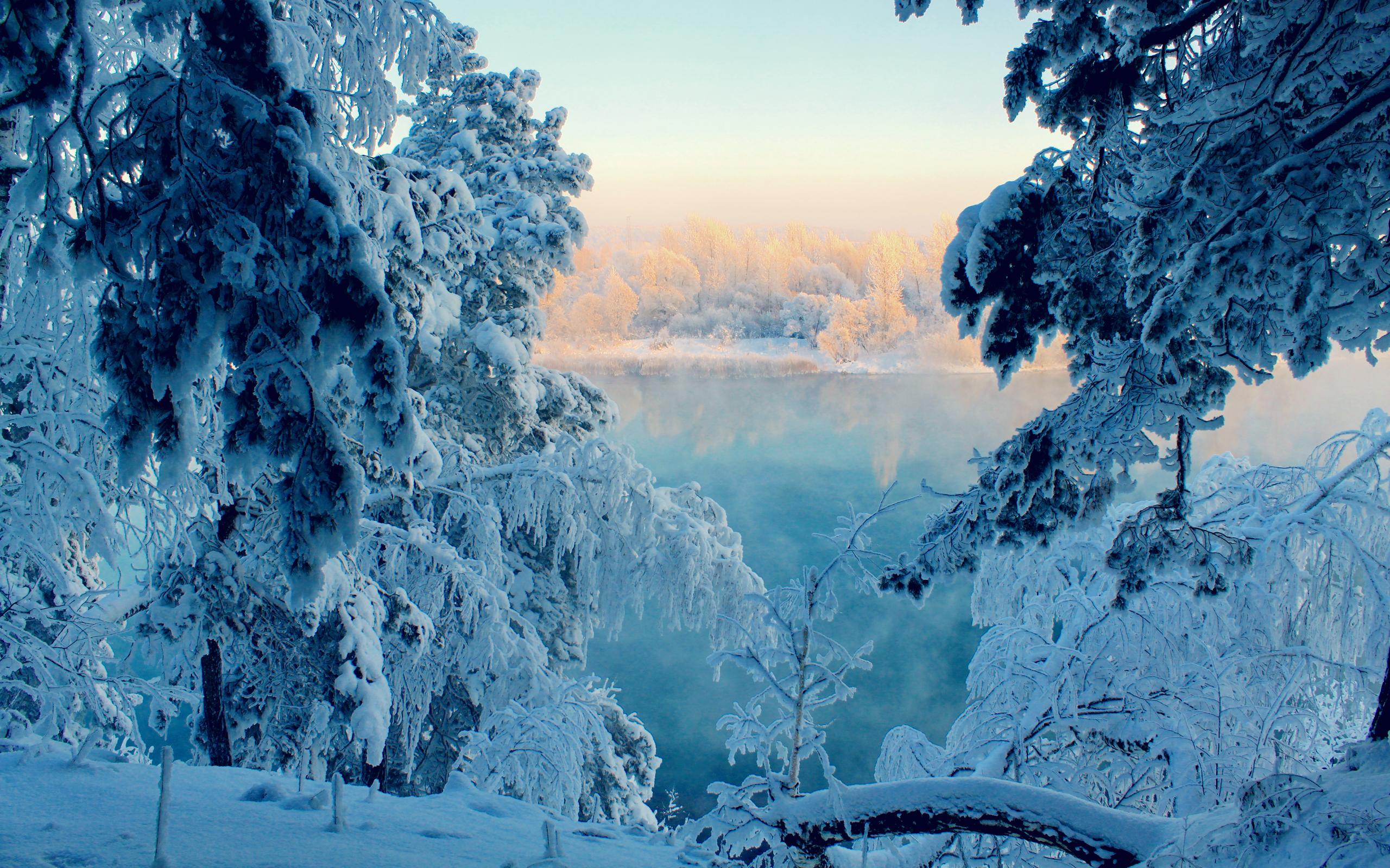 Обои зима деревья лес снег озеро для