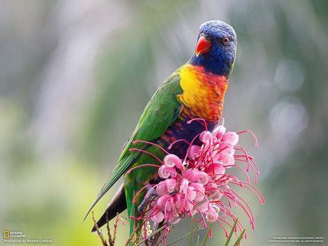 Фото бесплатно попугай, цветок, розовый