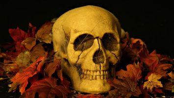 Photo free skull, white, leaves