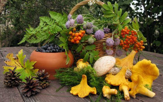 Бесплатные фото черника,грибы,шишки,стол,ветки,папоротник,лисички,осень,урожай,корзина,рябина,еда