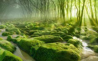 Бесплатные фото деревья,туман,солнце,камни,мох,вода,природа