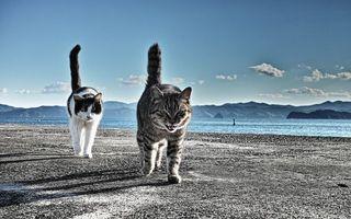 Бесплатные фото два,кота,походка,друзья,песок,пляж,камера