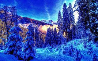 Фото бесплатно деревья, ель, зима