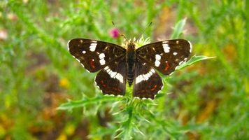 Бесплатные фото природа,лето,насекомые,бабочка,разное