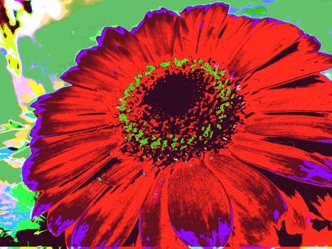 Фото бесплатно гербер, необычный, цветы