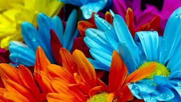 Photo free gerbera, petals, flowers