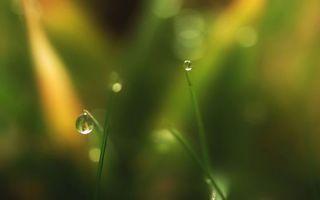 Бесплатные фото капли,роса,трава,макро,природа