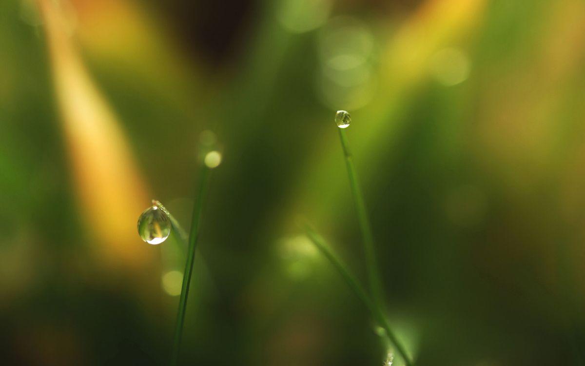 Фото бесплатно капли, роса, трава, макро, природа, природа
