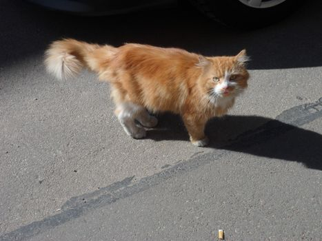 Бесплатные фото кошки,коты,улица,жизнь,рыжий,уличный,кошки