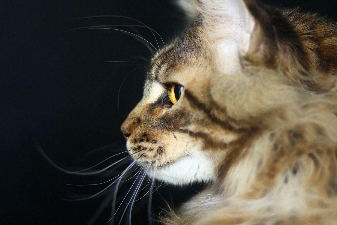 Обои кот, усы, глаза картинки на телефон