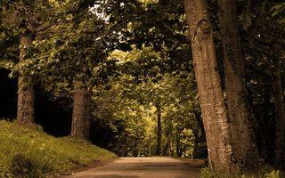 Фото бесплатно деревья, дорога, природа