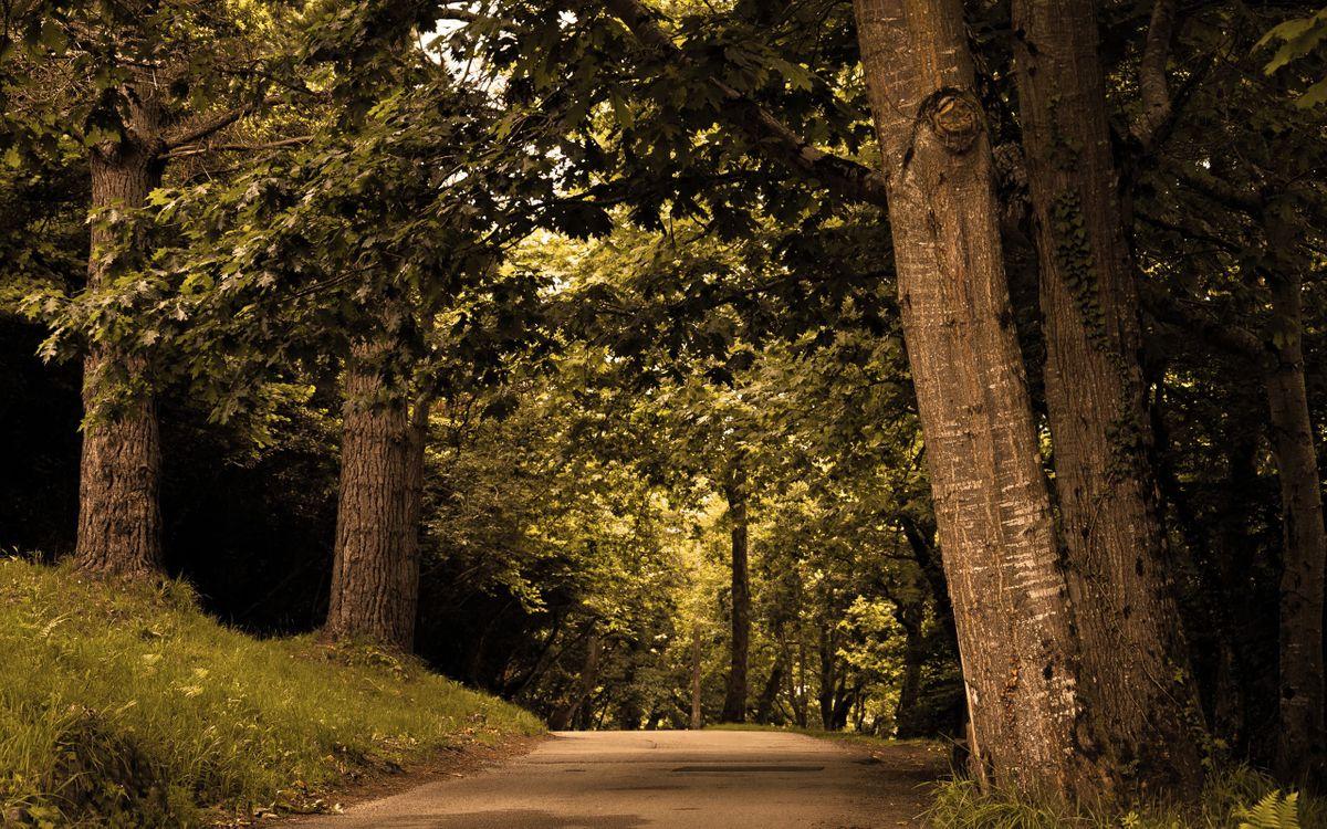 Фото бесплатно деревья, дорога, природа - на рабочий стол