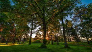 Фото бесплатно холмы, солнце, листья