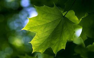 Бесплатные фото лист,зеленый,прожилки,просвечивается,свет,макро