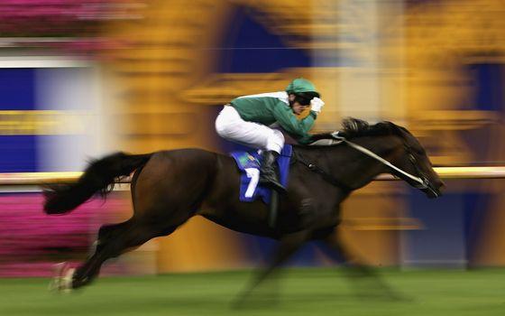 Photo free horse, man, athlete