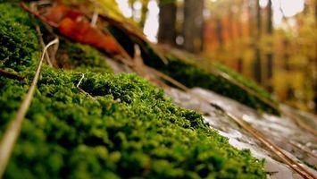 Фото бесплатно мох, трава, лес, парк, весна, лето, ветки, деревья, зелень, природа, пейзажи