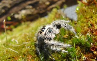 Photo free spider, eyes, tarantula