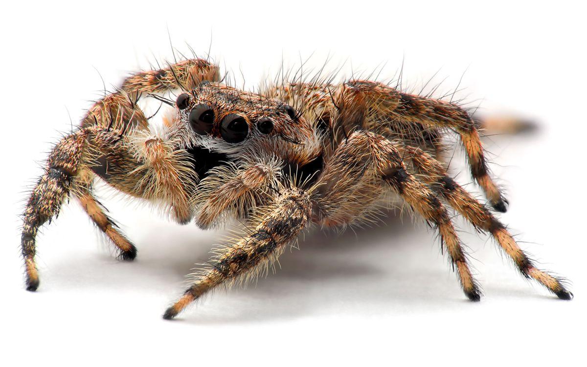Фото бесплатно паук, мохнатый, страшный - на рабочий стол