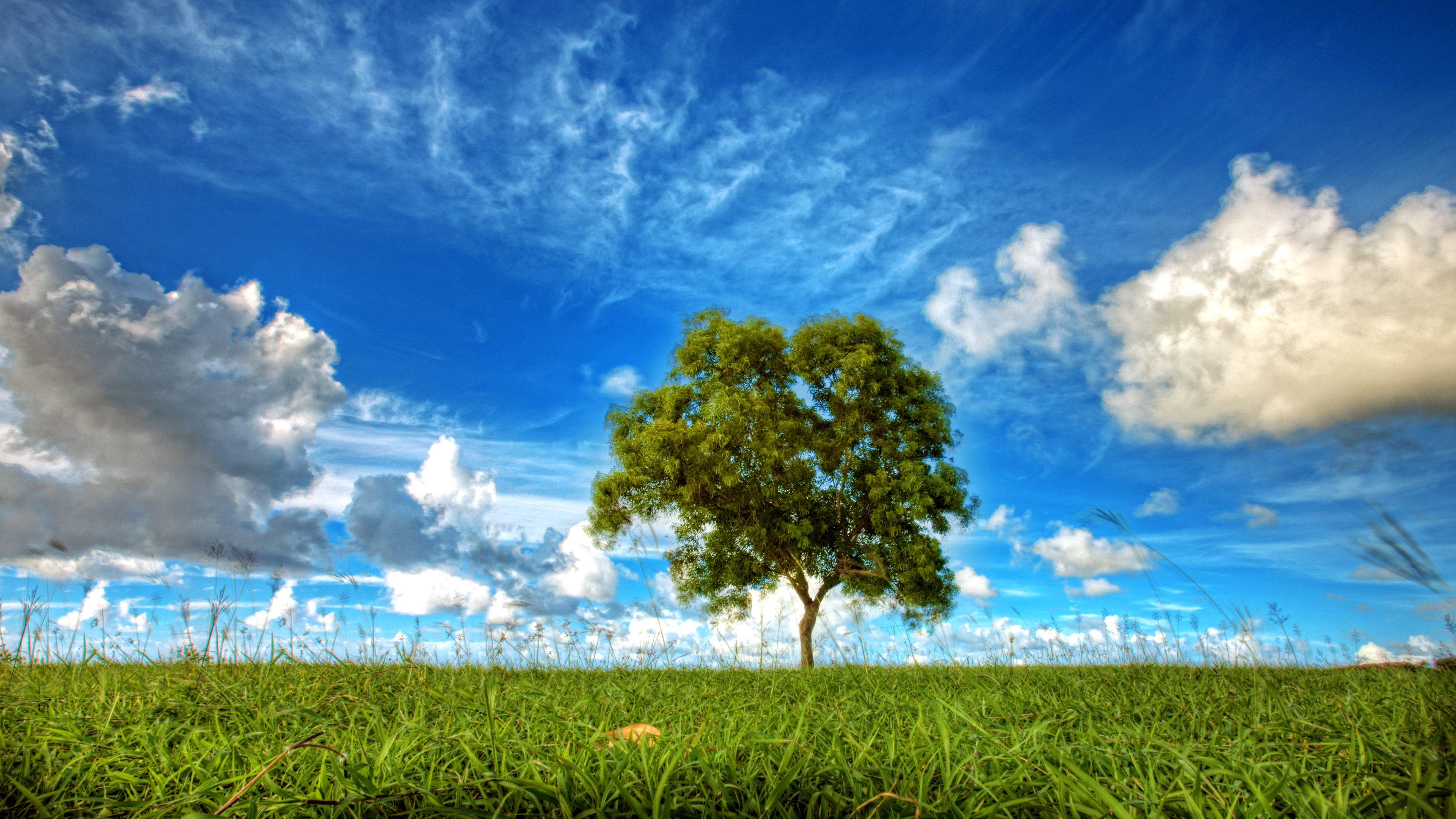 поле, трава, дерево