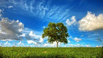 Бесплатные фото поле,трава,дерево,небо,облака,природа