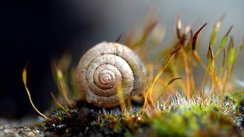 Фото бесплатно ракушка, улитка, дно, океан, аквариум, вода, жидкость, моллюск, водоросли, трава, камни, макро, подводный мир