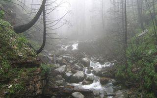 Бесплатные фото ручей,камни,горы,деревья,трава,туман,природа