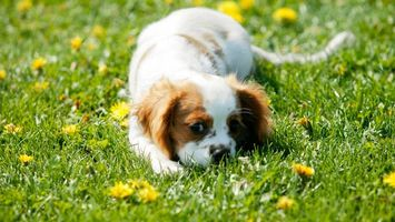 Photo free color, breed, puppy