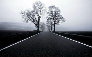 Бесплатные фото загородная,дорога,асфальт,весна,деревья,туман,сырость