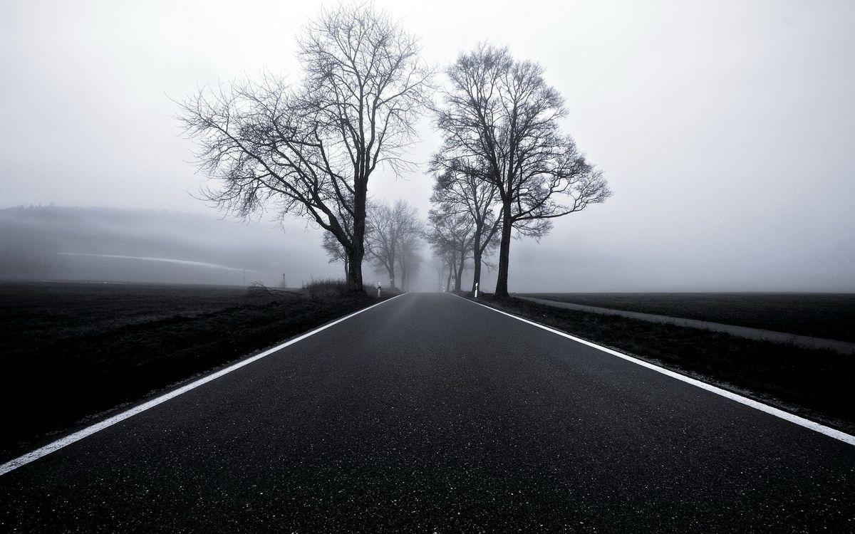 Фото бесплатно загородная, дорога, асфальт, весна, деревья, туман, сырость, сепия, природа, природа