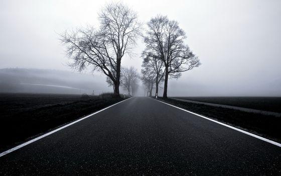 Фото бесплатно загородная, дорога, асфальт, весна, деревья, туман, сырость, сепия, природа